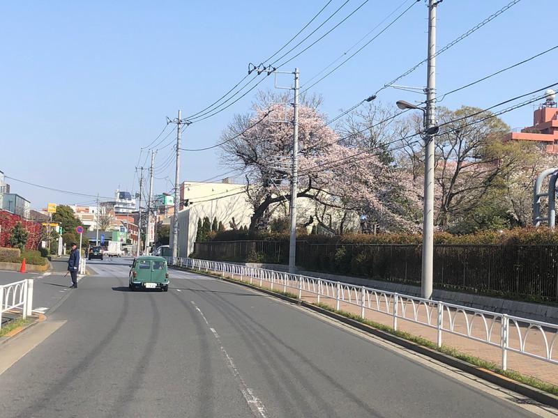 桜とカントリーマン