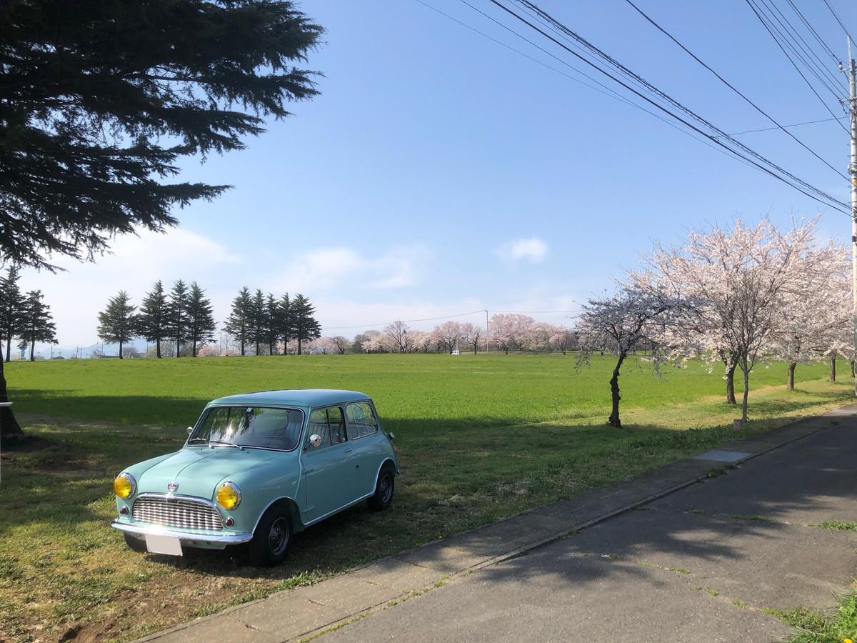 桜とミニと青空と PART2